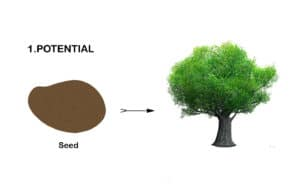 fc seed pot