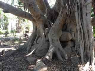 thumbnail-roots